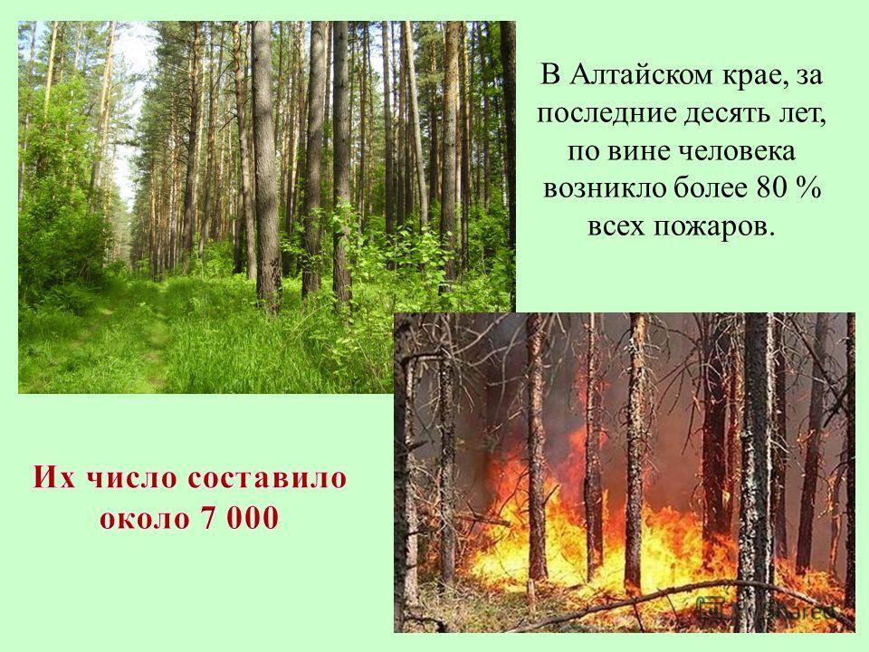 В Алтайском крае, за последние десять лет, по вине человека возникло более 80 % всех пожаров.