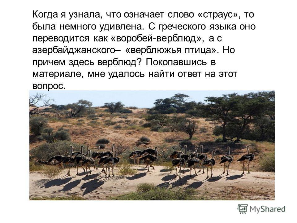 Когда я узнала, что означает слово «страус», то была немного удивлена. С греческого языка оно переводится как «воробей-верблюд», а с азербайджанского– «верблюжья птица». Но причем здесь верблюд? Покопавшись в материале, мне удалось найти ответ на это