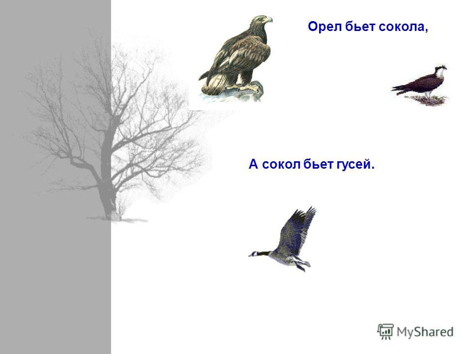 Орел бьет сокола, А сокол бьет гусей.