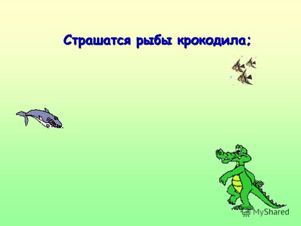 Страшатся рыбы крокодила;