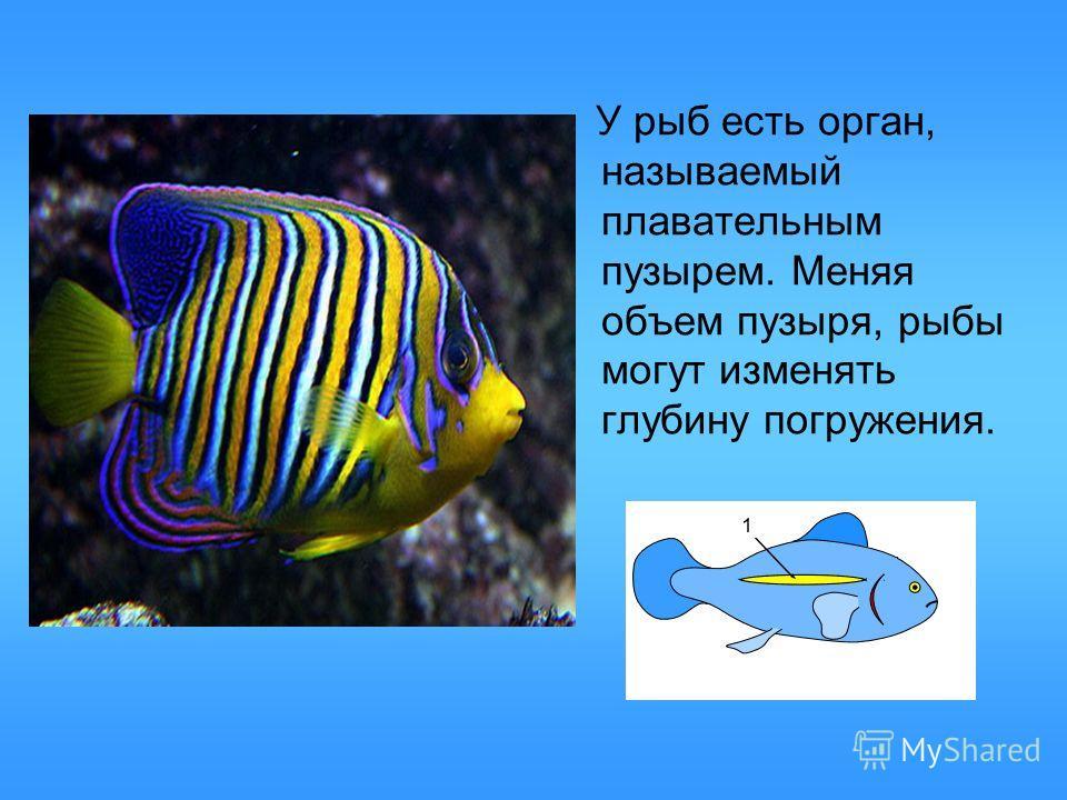 У рыб есть орган, называемый плавательным пузырем. Меняя объем пузыря, рыбы могут изменять глубину погружения.