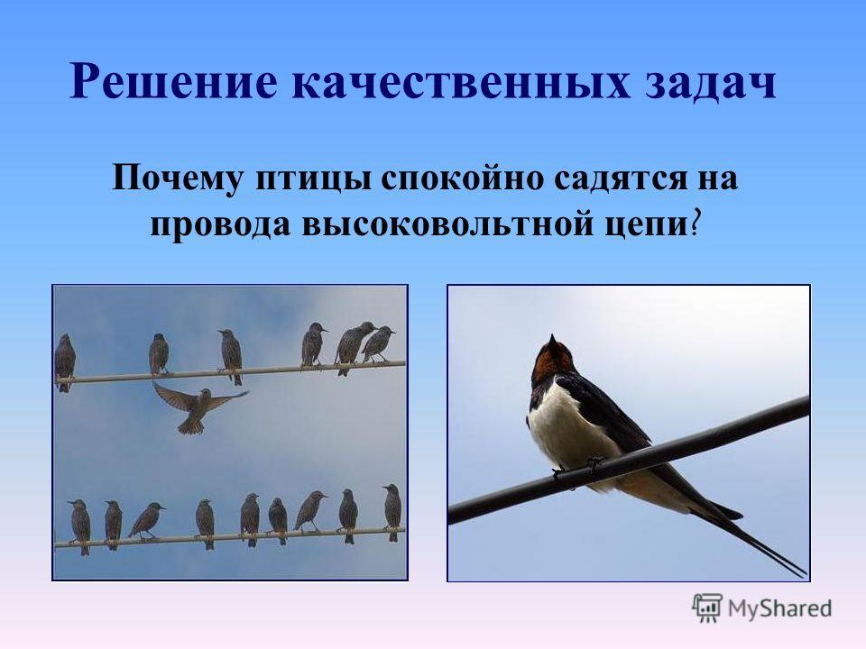 Решение качественных задач Почему птицы спокойно садятся на провода высоковольтной цепи ?
