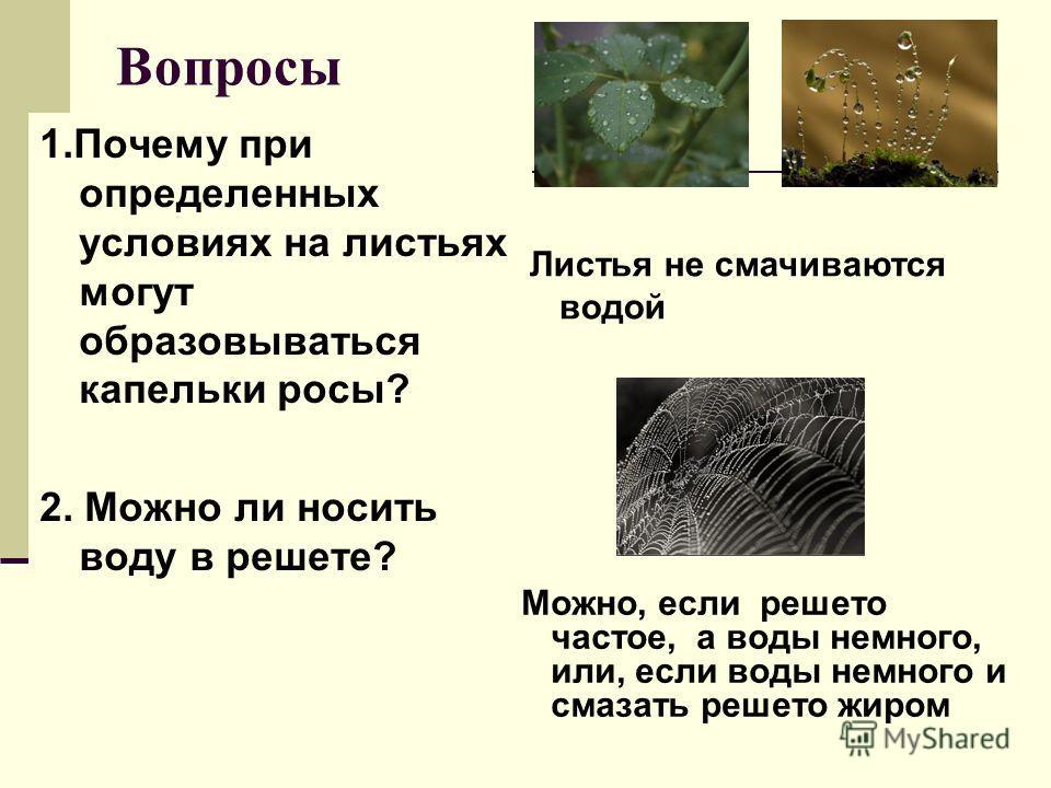 Вопросы 1.Почему при определенных условиях на листьях могут образовываться капельки росы? 2. Можно ли носить воду в решете? Листья не смачиваются водой Можно, если решето частое, а воды немного, или, если воды немного и смазать решето жиром
