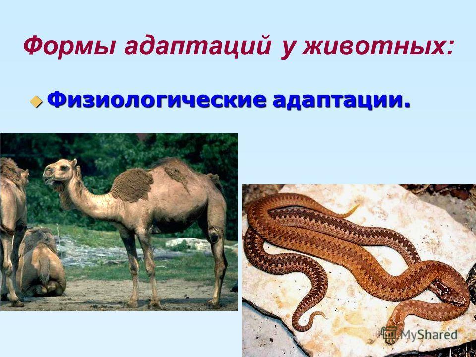 Формы адаптаций у животных: Физиологические адаптации. Физиологические адаптации.