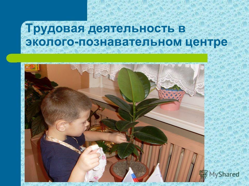 Трудовая деятельность в эколого-познавательном центре