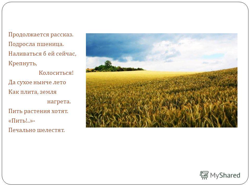Продолжается рассказ. Подросла пшеница. Наливаться б ей сейчас, Крепнуть, Колоситься ! Да сухое нынче лето Как плита, земля нагрета. Пить растения хотят. « Пить !..»- Печально шелестят.