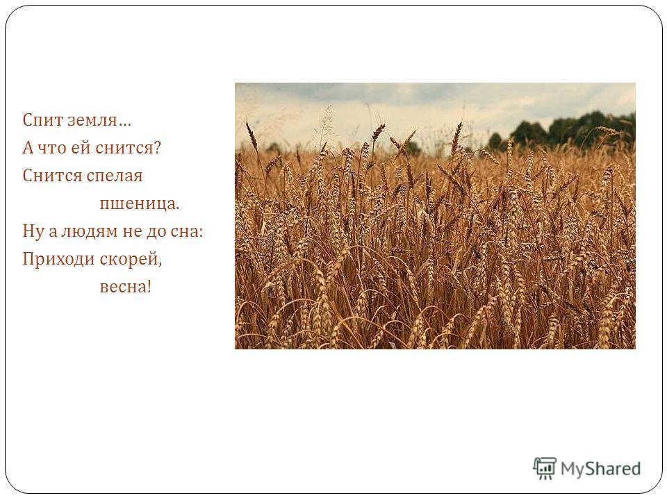 Спит земля … А что ей снится ? Снится спелая пшеница. Ну а людям не до сна : Приходи скорей, весна !