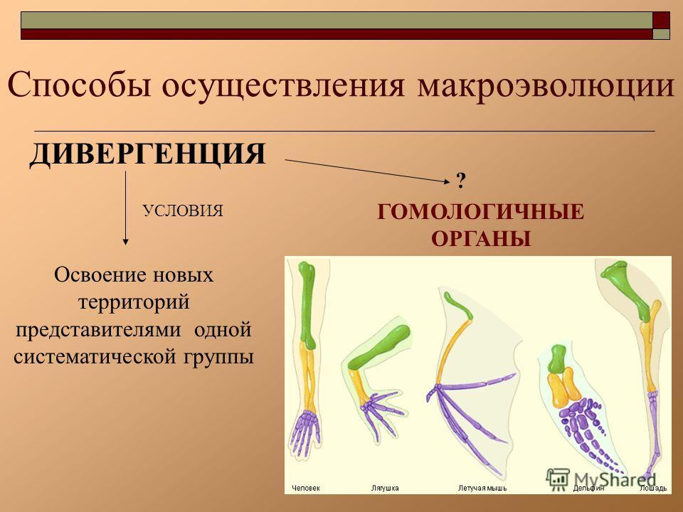 Презентация Видообразование 11 Класс Биология