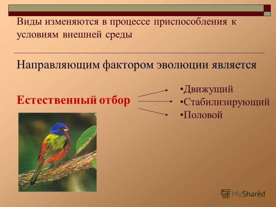 7 Виды изменяются в процессе приспособления к условиям внешней среды Направляющим фактором эволюции является Естественный отбор Движущий Стабилизирующий Половой