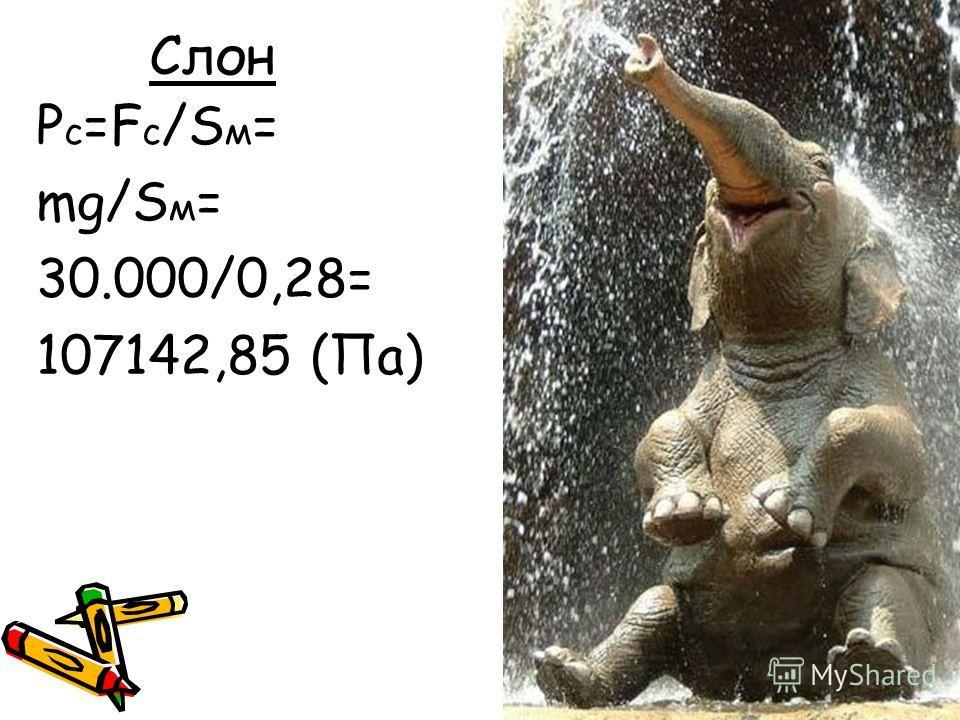 Слон P c =F c /S м = mg/S м = 30.000/0,28= 107142,85 (Па)