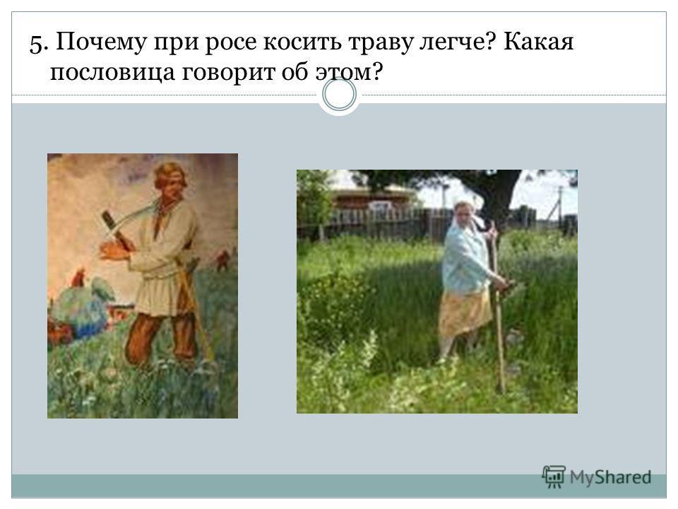 5. Почему при росе косить траву легче? Какая пословица говорит об этом?