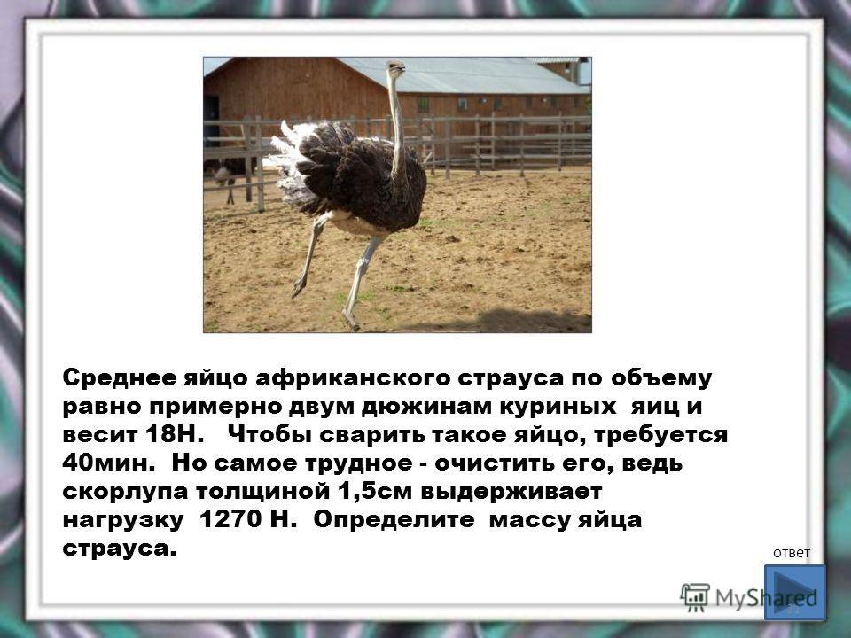 Среднее яйцо африканского страуса по объему равно примерно двум дюжинам куриных яиц и весит 18Н. Чтобы сварить такое яйцо, требуется 40мин. Но самое трудное - очистить его, ведь скорлупа толщиной 1,5см выдерживает нагрузку 1270 Н. Определите массу яй