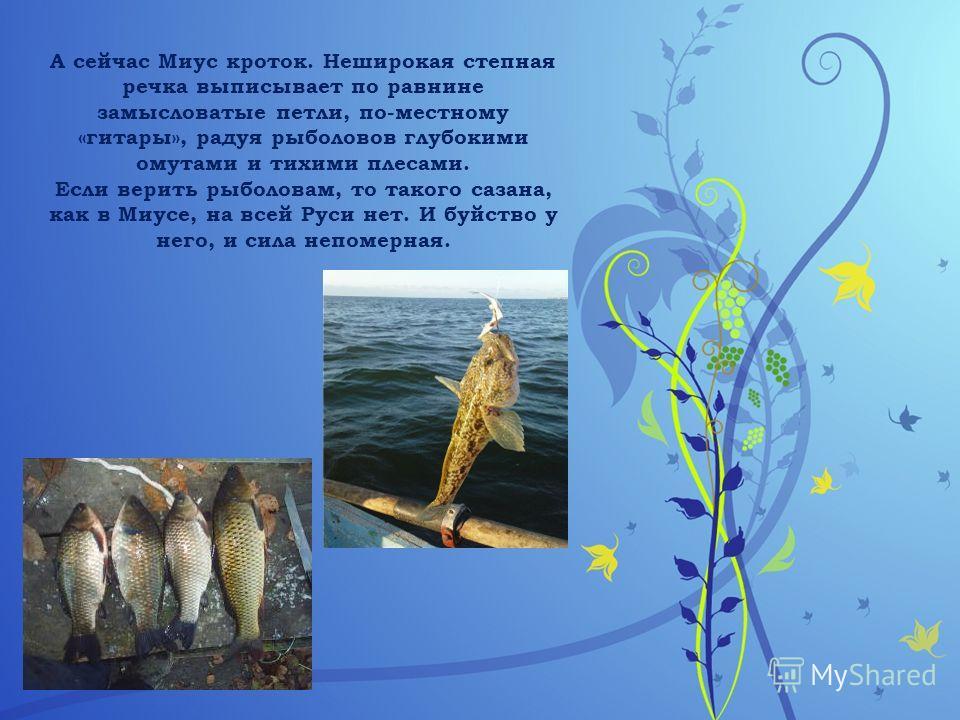 А сейчас Миус кроток. Неширокая степная речка выписывает по равнине замысловатые петли, по-местному «гитары», радуя рыболовов глубокими омутами и тихими плесами. Если верить рыболовам, то такого сазана, как в Миусе, на всей Руси нет. И буйство у него
