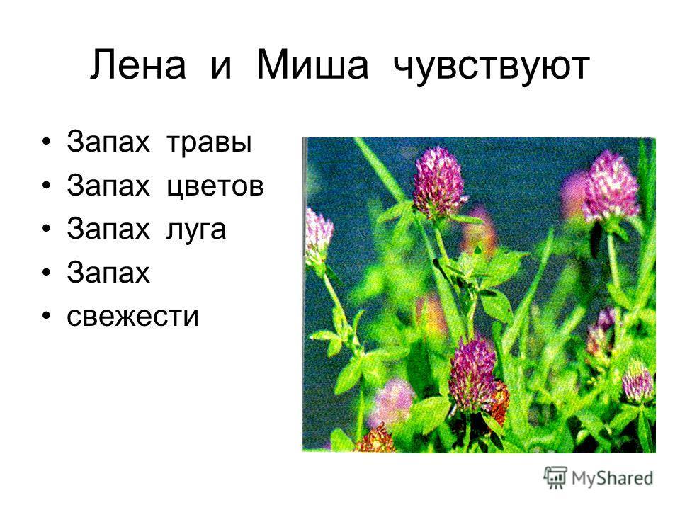 Лена и Миша чувствуют Запах травы Запах цветов Запах луга Запах свежести
