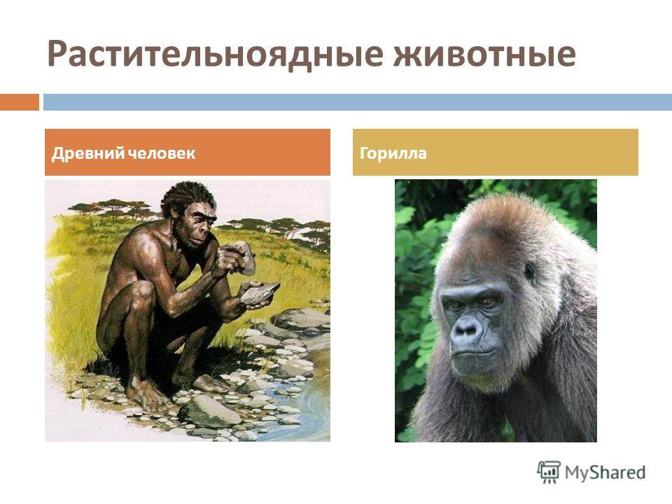 Растительноядные животные Древний человекГорилла