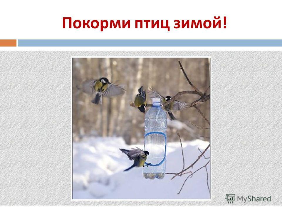 Покорми птиц зимой !