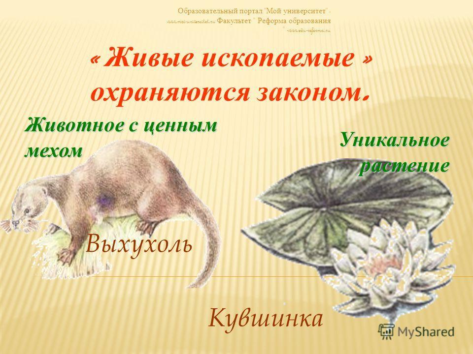 Образовательный портал  Мой университет  - www.moi-universitet.ru Факультет  Реформа образования  -www.edu-reforma.ru