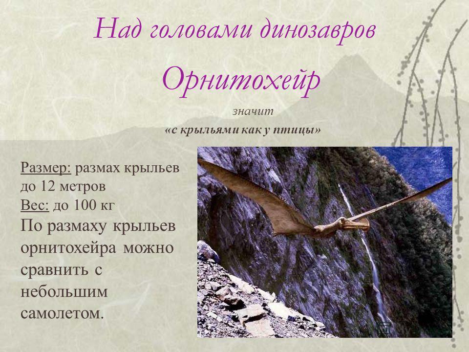 Над головами динозавров Орнитохейр значит «с крыльями как у птицы» Размер: размах крыльев до 12 метров Вес: до 100 кг По размаху крыльев орнитохейра можно сравнить с небольшим самолетом.