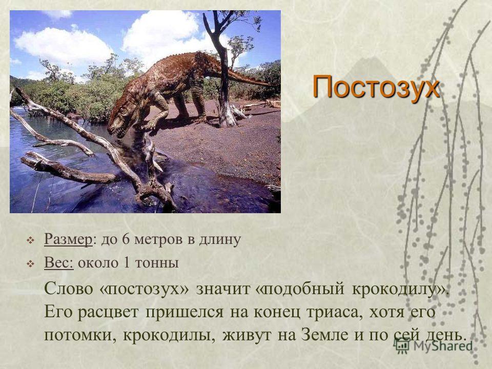 Постозух Размер: до 6 метров в длину Вес: около 1 тонны Слово «постозух» значит «подобный крокодилу». Его расцвет пришелся на конец триаса, хотя его потомки, крокодилы, живут на Земле и по сей день.