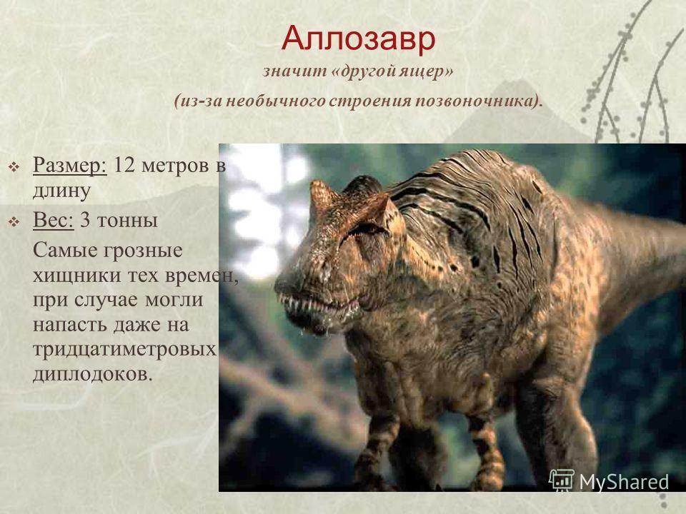 Аллозавр значит «другой ящер» (из-за необычного строения позвоночника). Размер: 12 метров в длину Вес: 3 тонны Самые грозные хищники тех времен, при случае могли напасть даже на тридцатиметровых диплодоков.