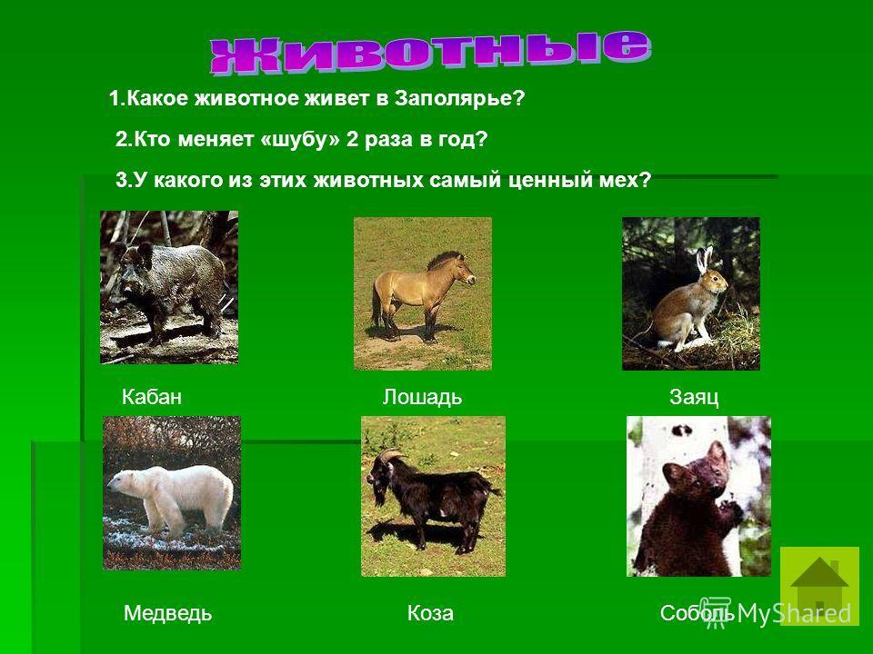 Кабан Лошадь Заяц Медведь Коза Соболь 1.Какое животное живет в Заполярье? 2.Кто меняет «шубу» 2 раза в год? 3.У какого из этих животных самый ценный мех?