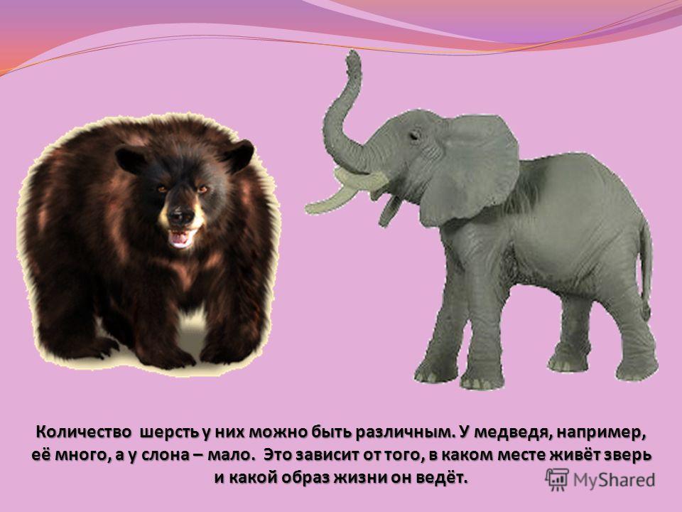 Мягкая, жёсткая, пушистая … Шерсть разного цвета. Шерсть состоит из волосков. Такими волосками покрыто тело зверей.