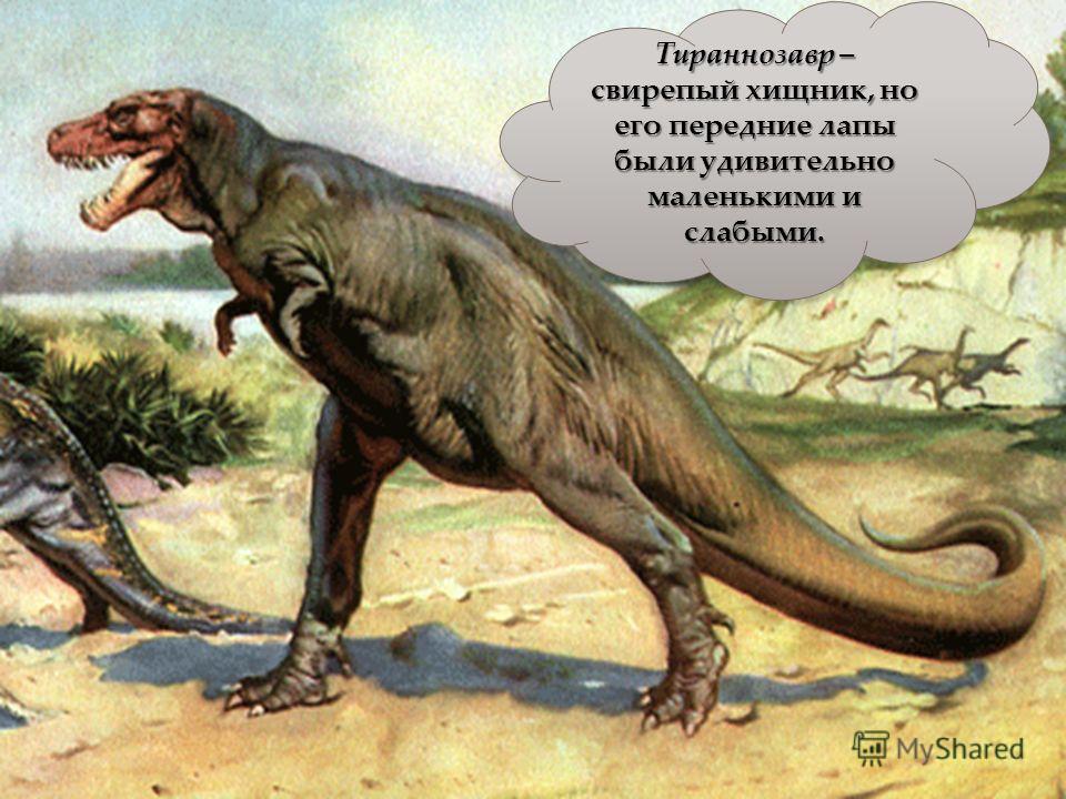 Тираннозавр – свирепый хищник, но его передние лапы были удивительно маленькими и слабыми.