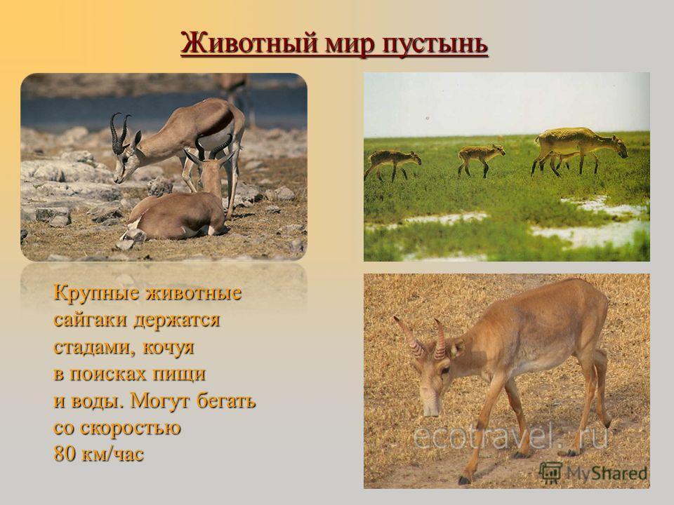 Животный мир пустынь Маленькое забавное животное тушканчик с помощью своих сильных задних ног может прыгать до 3 метров при росте не более 15 см. Длинный хвост помогает поддерживать равновесие, особенно при резких поворотах. Тушканчик- ночное животно