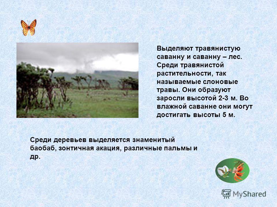 Выделяют травянистую саванну и саванну – лес. Среди травянистой растительности, так называемые слоновые травы. Они образуют заросли высотой 2-3 м. Во влажной саванне они могут достигать высоты 5 м. Среди деревьев выделяется знаменитый баобаб, зонтичн