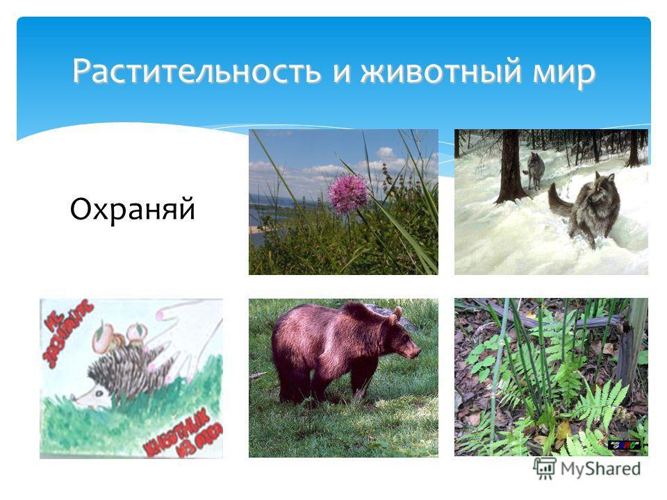 Растительность и животный мир Охраняй