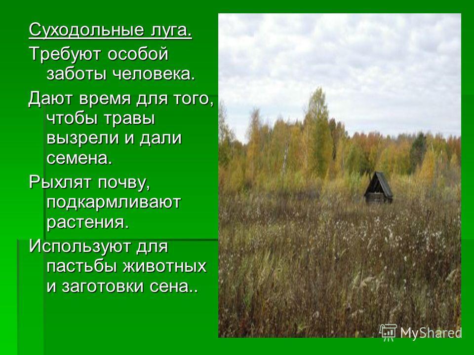 Суходольные луга. Требуют особой заботы человека. Дают время для того, чтобы травы вызрели и дали семена. Рыхлят почву, подкармливают растения. Используют для пастьбы животных и заготовки сена..
