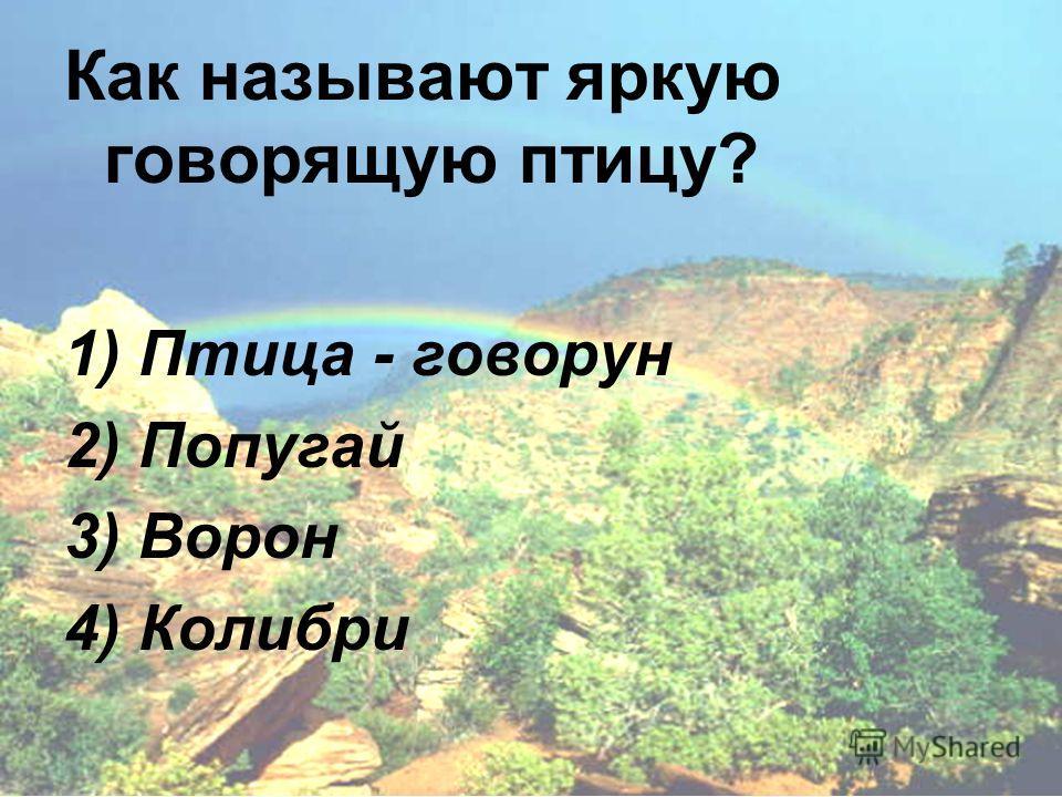 Как называют яркую говорящую птицу? 1) Птица - говорун 2) Попугай 3) Ворон 4) Колибри