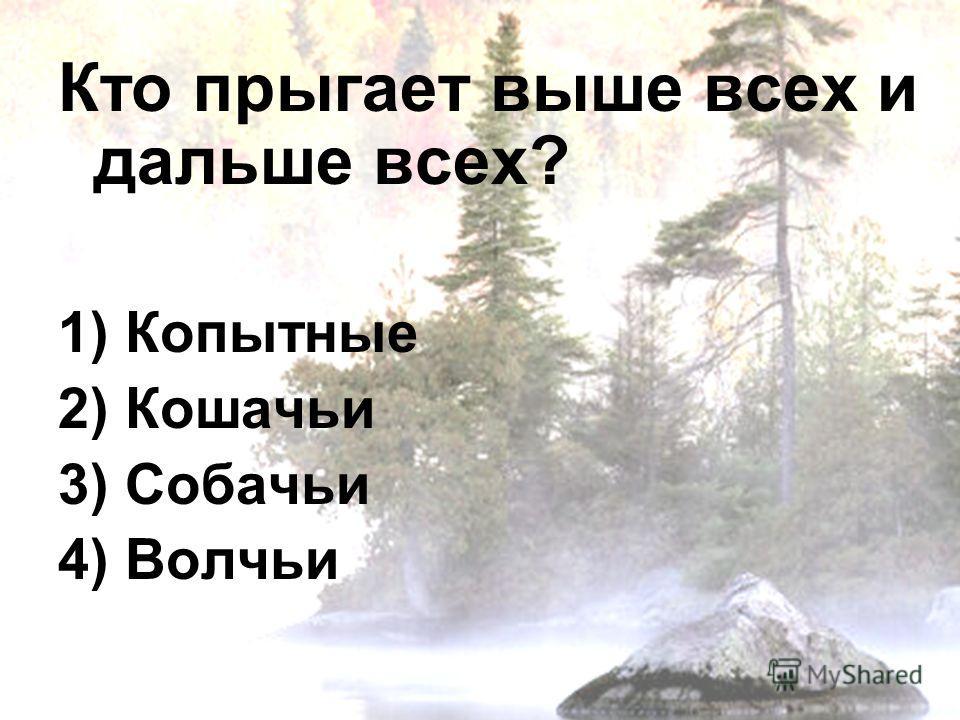 Кто прыгает выше всех и дальше всех? 1) Копытные 2) Кошачьи 3) Собачьи 4) Волчьи