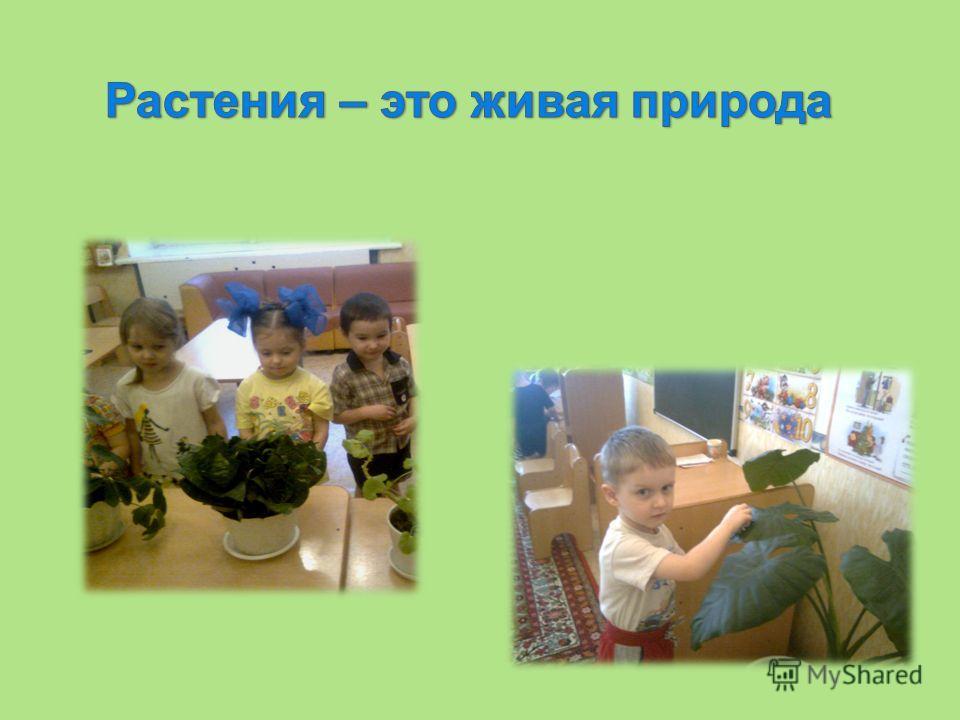 Цель проекта: Расширять знания о комнатных растениях, углублять знания по уходу за ними, прививать любовь и бережное отношение к природе. Задачи проекта: 1. Развивать интерес, активность дошкольников, удовлетворять детскую любознательность. 2. Проявл