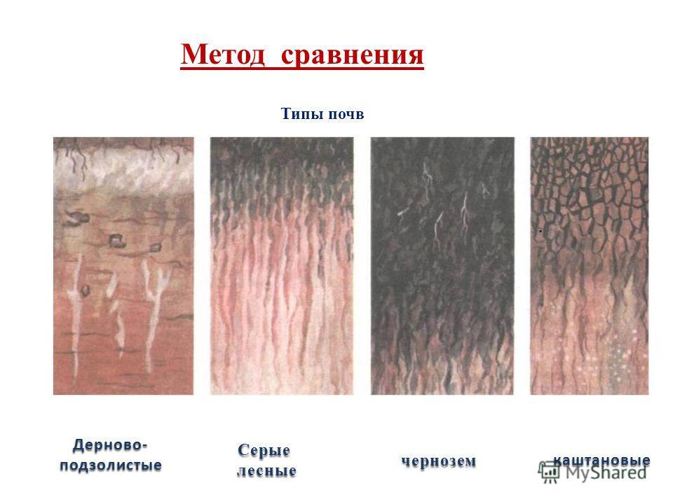 Метод сравнения Типы почв Дерново-подзолистые Серые лесные лесные черноземкаштановые