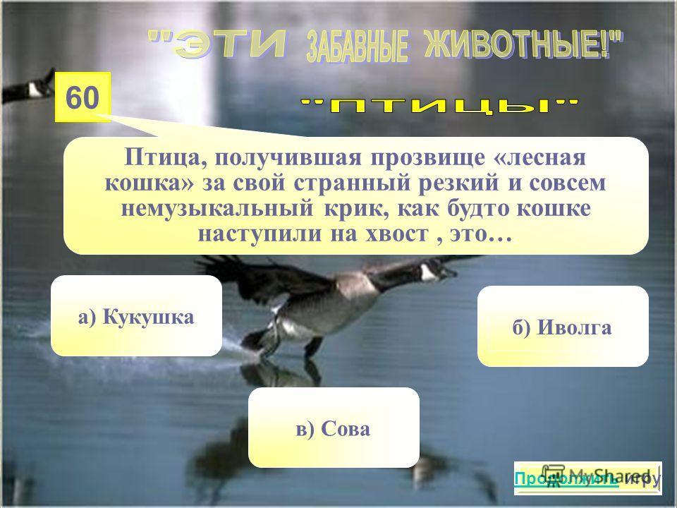 50 Самая маленькая птичка, которая умеет летать задом наперёд. Звук, возникающий при этом, похож на жужжание. Это … а)Райская птичка в)Снегирь б) Колибри Продолжить игру