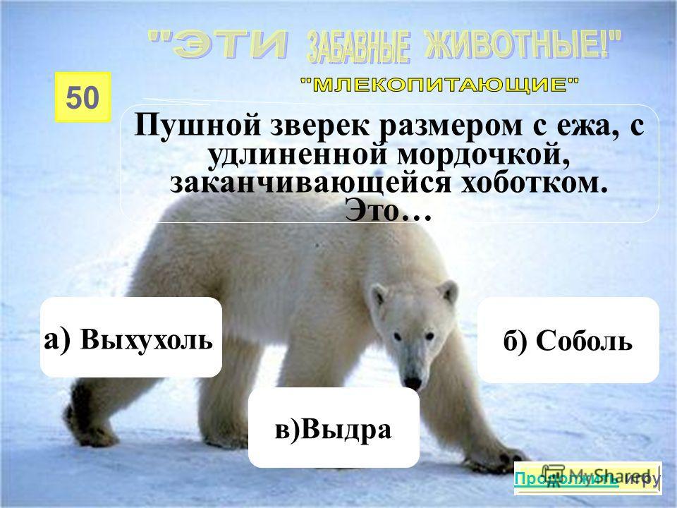 40 Какое животное питается, лежа на спине, разделывая добычу с помощью припасенного для этого камня? а) Тюлень в)Кулан б) Калан Продолжить игру