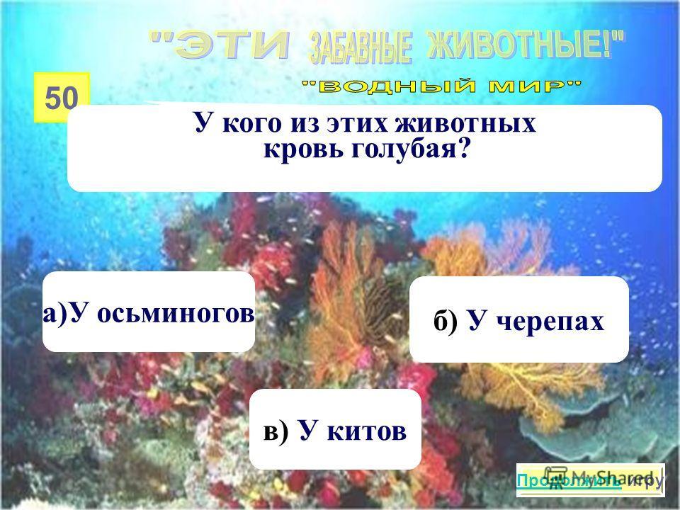 40 К морским животным относятся… а) Морские кабачки в) Морские огурцы б) Морские помидоры Продолжить игру