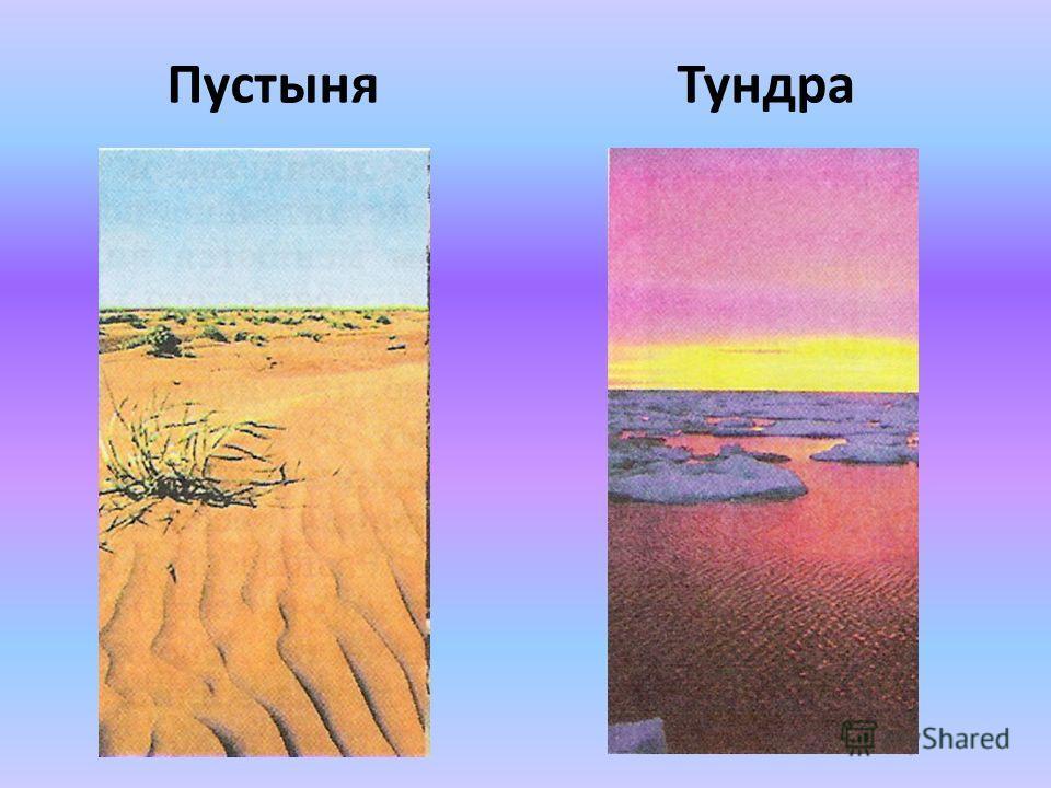 ПустыняТундра