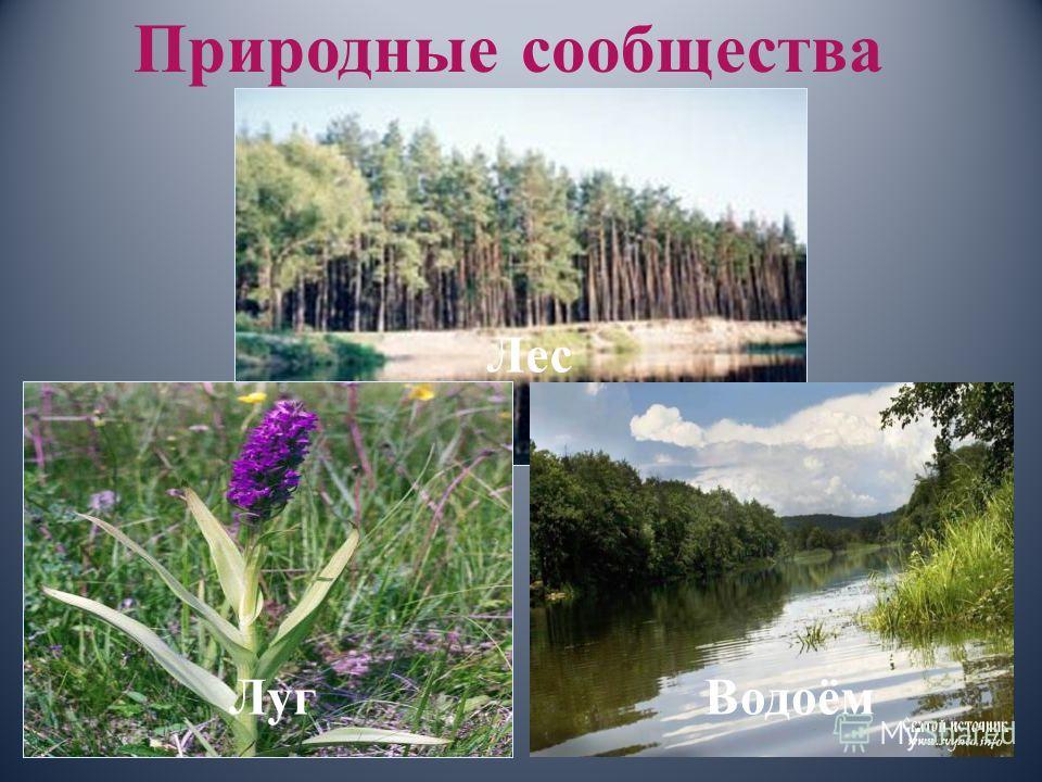 Природные сообщества Лес ЛугВодоём