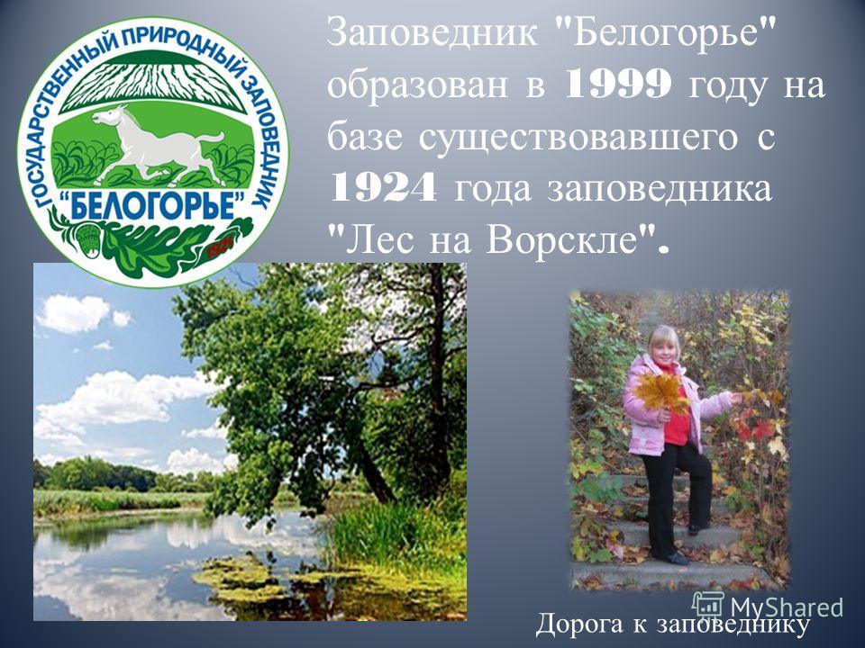 Заповедник  Белогорье  образован в 1999 году на базе существовавшего с 1924 года заповедника  Лес на Ворскле . Дорога к заповеднику