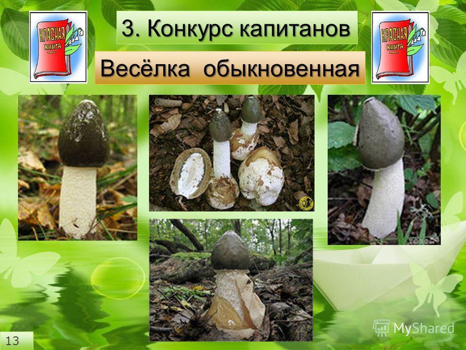 3. Конкурс капитанов Весёлка обыкновенная 13