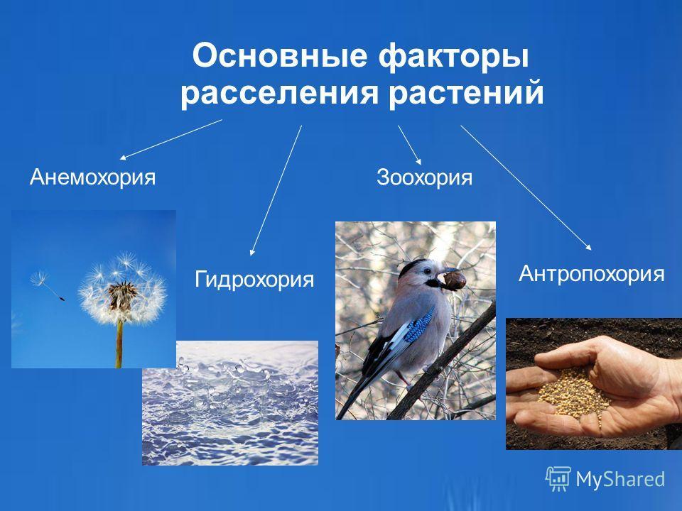 Основные факторы расселения растений Анемохория Зоохория Гидрохория Антропохория