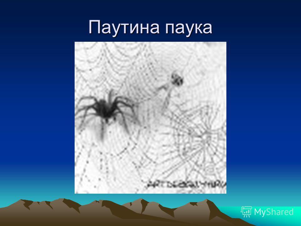 Паутина паука
