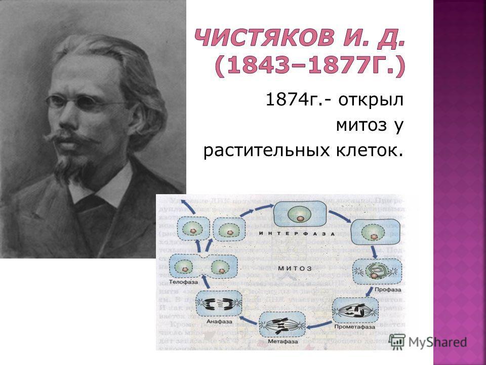 1874г.- открыл митоз у растительных клеток.