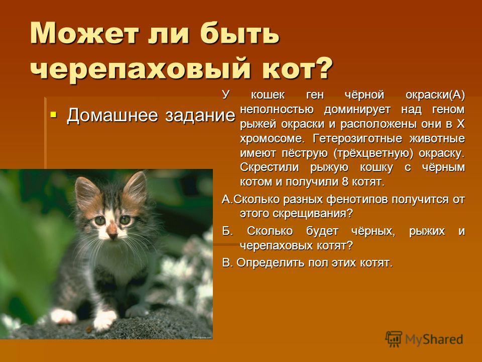Может ли быть черепаховый кот? Домашнее задание Домашнее задание У кошек ген чёрной окраски(А) неполностью доминирует над геном рыжей окраски и расположены они в Х хромосоме. Гетерозиготные животные имеют пёструю (трёхцветную) окраску. Скрестили рыжу