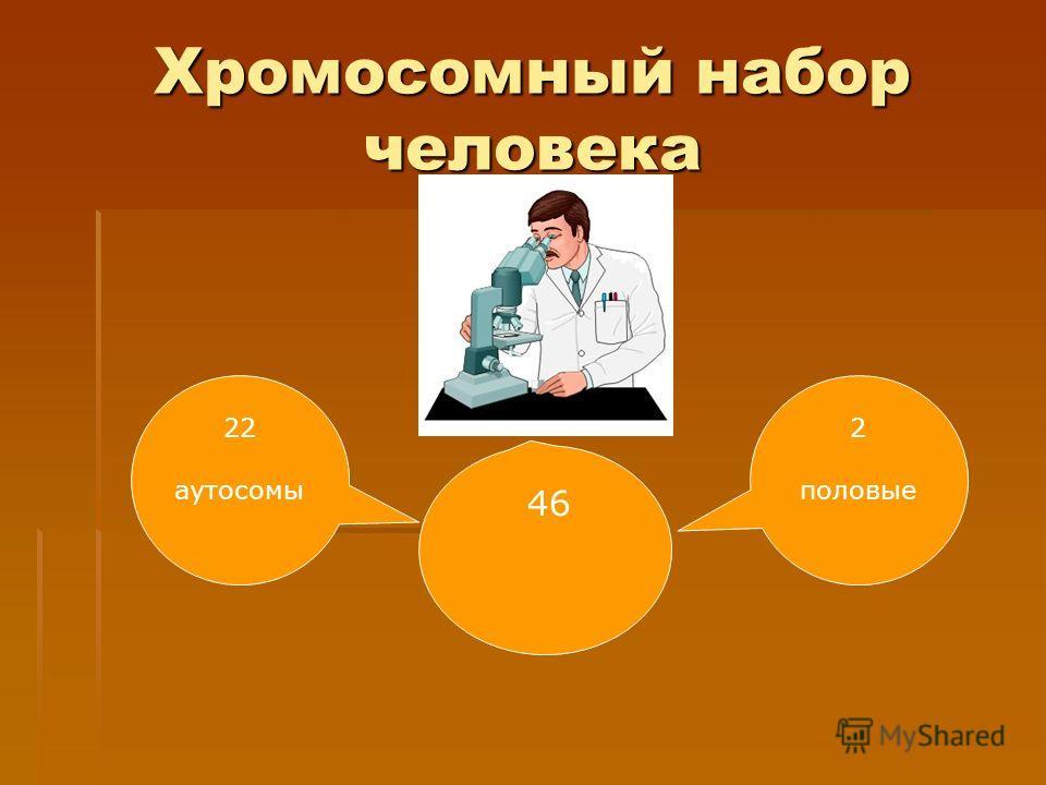 Хромосомный набор человека 22 аутосомы 46 2 половые