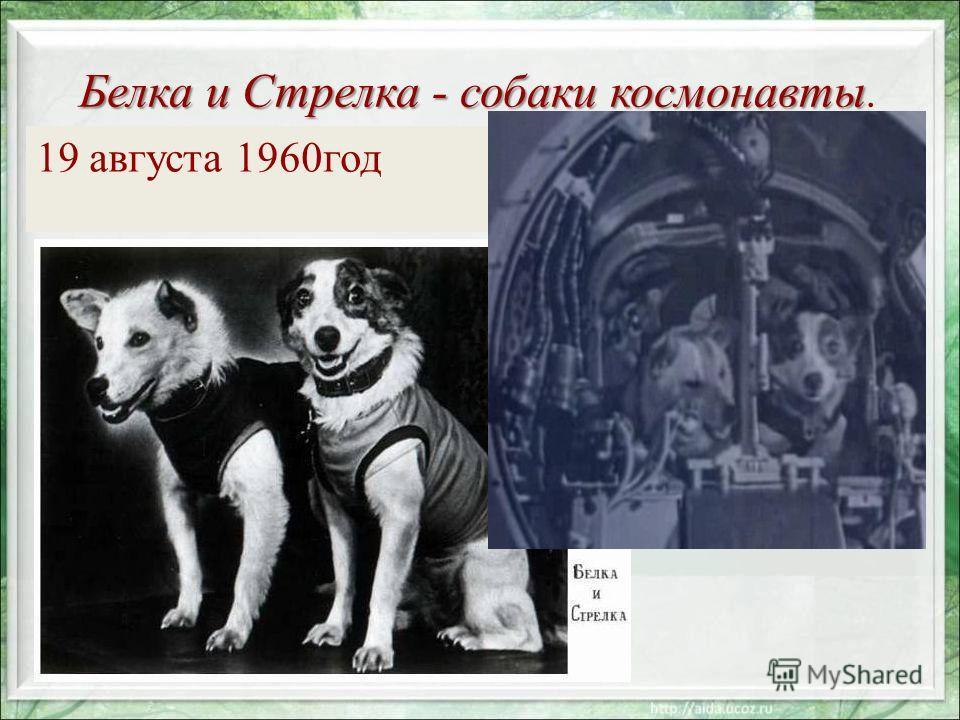 Белка и Стрелка - собаки космонавты Белка и Стрелка - собаки космонавты. 19 августа 1960год