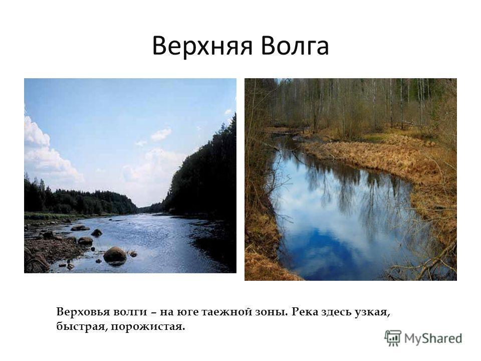 Верхняя Волга Верховья волги – на юге таежной зоны. Река здесь узкая, быстрая, порожистая.