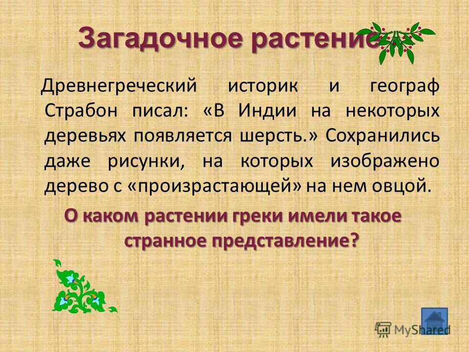 Загадочное растение Древнегреческий историк и географ Страбон писал: «В Индии на некоторых деревьях появляется шерсть.» Сохранились даже рисунки, на которых изображено дерево с «произрастающей» на нем овцой. О каком растении греки имели такое странно